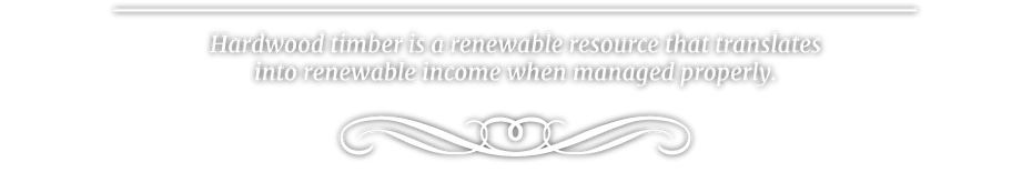 Hardwood timber is a renewable resource that translates into renewable income when managed properly.