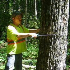 Rod Measuring a tree using Calipers